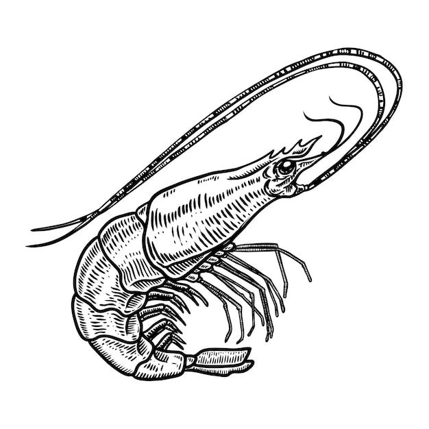 Illustrazione disegnata a mano del gamberetto su fondo bianco. frutti di mare. elemento per poster, carta, menu, emblema. immagine Vettore Premium