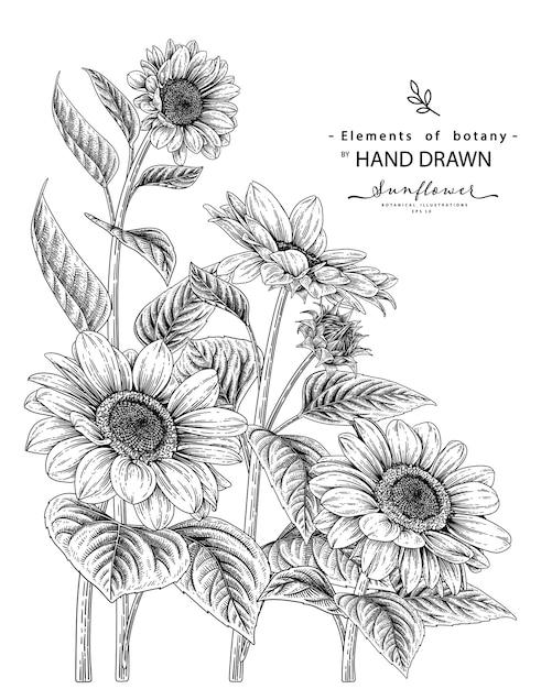 Set decorativo di fiori di girasole disegnati a mano linea arte nera isolato su sfondi bianchi. Vettore Premium