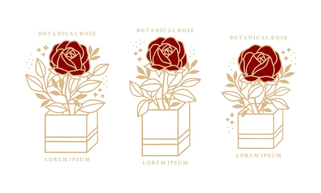 Insieme del fiore di peonia rosa botanica vintage disegnato a mano Vettore Premium