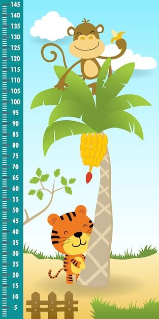 Parete di misurazione dell'altezza della scimmia divertente sul banano con la tigre Vettore Premium