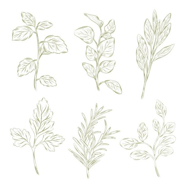 Erbe e fiori selvatici in stile vintage Vettore Premium