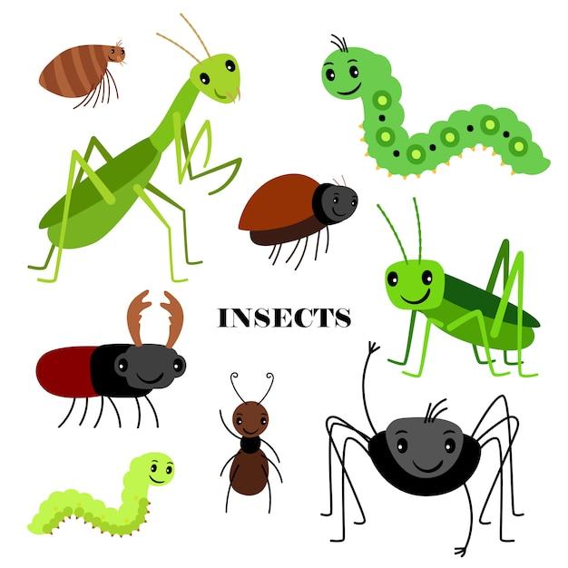 Illustrazione degli insetti striscianti su fondo bianco Vettore Premium