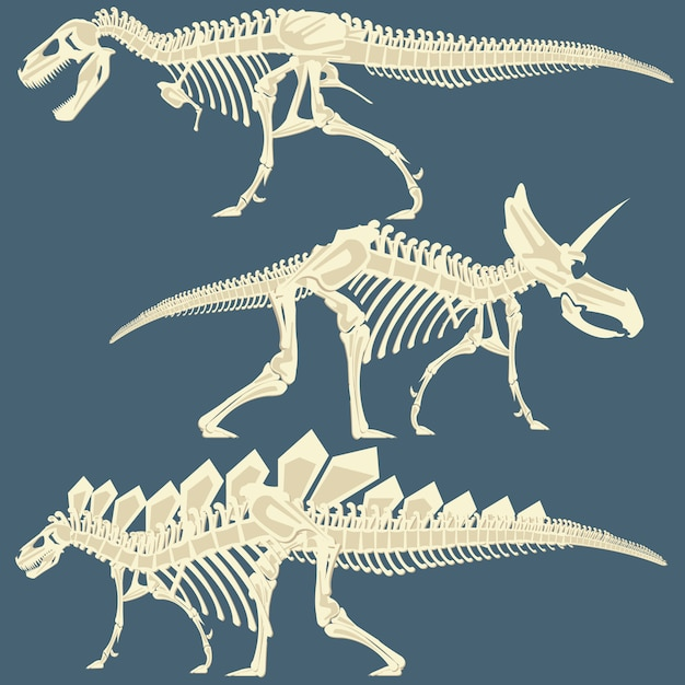 L'immagine dello scheletro del dinosauro Vettore Premium