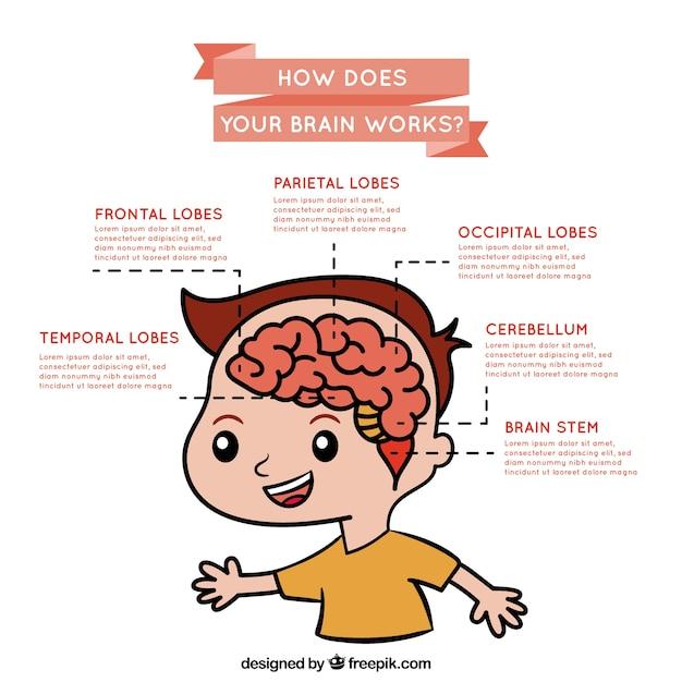 Infografica sul funzionamento del cervello Vettore Premium