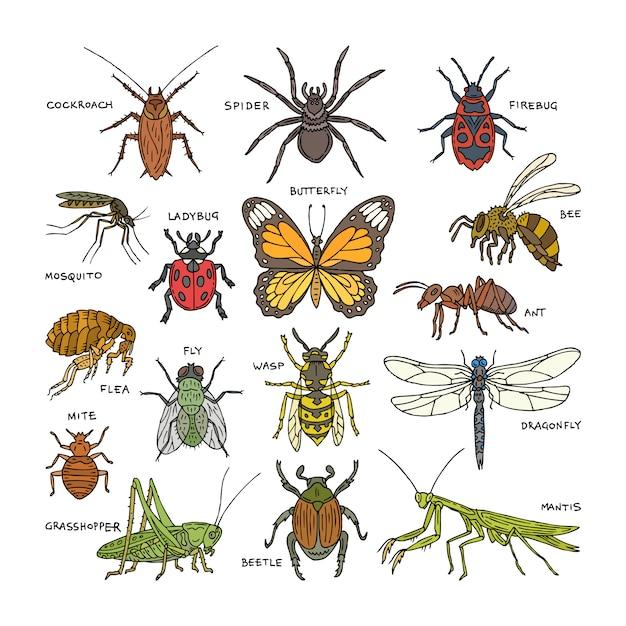 Insetto coleottero insetto o formica e ape volante o farfalla e libellula o coccinella in natura illustrazione set di scarafaggio o ragno con zanzara e cavalletta su sfondo bianco Vettore Premium