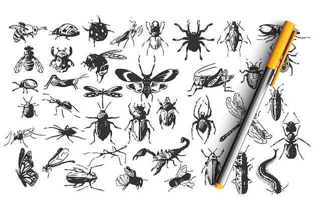 Insieme di doodle di insetti Vettore Premium