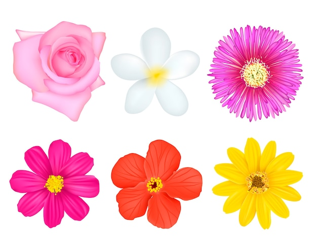 Set di fiori colorati isolati Vettore Premium