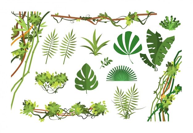 Jungle vine. foglie della foresta pluviale del fumetto e piante invase liana. impostato Vettore Premium