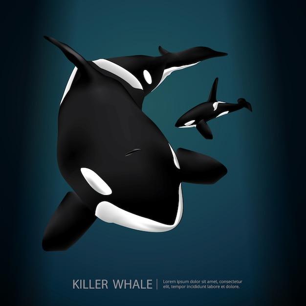 Killer whale under the sea vector illustration Vettore Premium