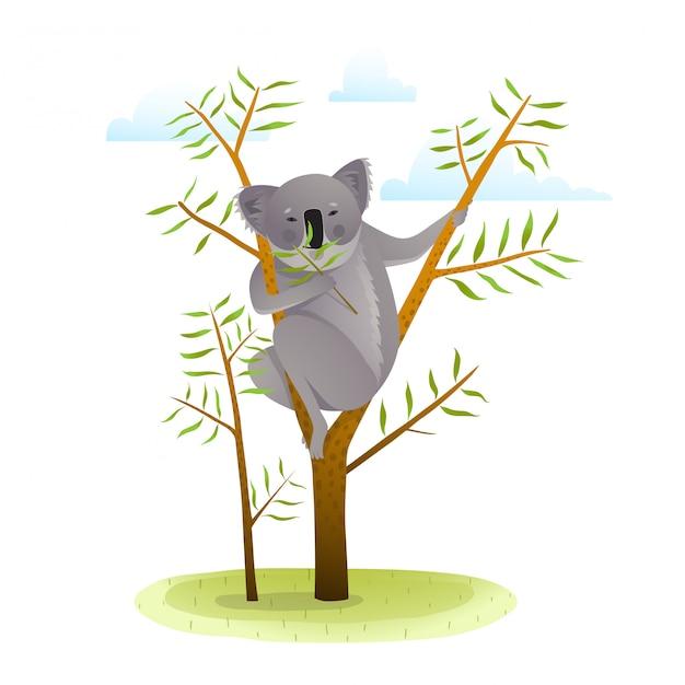 Koala sull'albero di eucalyptus Vettore Premium