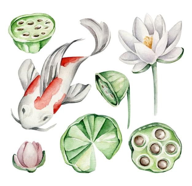 Pesce koi, fiore di loto, foglie di loto Vettore Premium