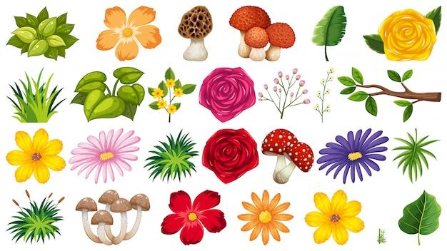 Grande gruppo di fiori isolati Vettore Premium