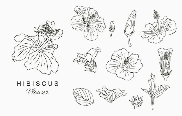 Collezione di fiori line art con ibisco. Vettore Premium