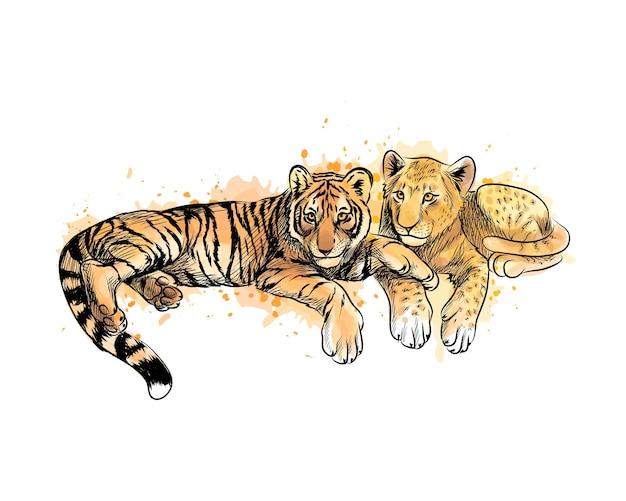 Cucciolo di leone e cucciolo di tigre da una spruzzata di acquerello, schizzo disegnato a mano. illustrazione di vernici Vettore Premium