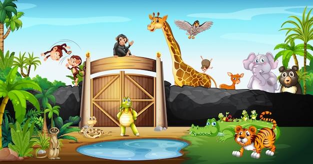 Molti animali nel parco Vettore Premium