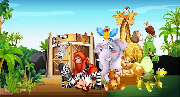 Molti simpatici animali allo zoo Vettore Premium