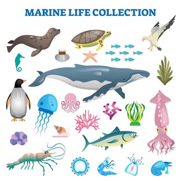 Illustrazione della raccolta di vita marina. pesci di fauna selvatica di mare e oceano Vettore Premium