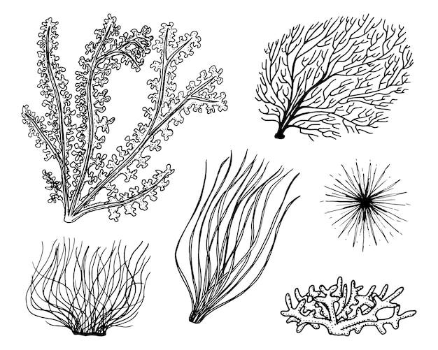 Alghe delle piante marine. vita vegetale e cibo per i pesci. incisi disegnati a mano nel vecchio schizzo, stile vintage. green nautici o marini, mostri o pesci. animali nell'oceano. Vettore Premium