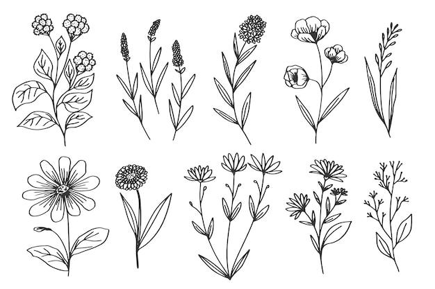 Disegnare in bianco e nero con fiori ed erbe Vettore Premium