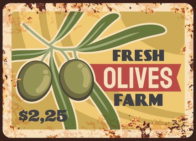 Piastra di metallo arrugginito raccolta fattoria olive ramo di ulivo con foglie e frutti maturi cartoon. Vettore Premium