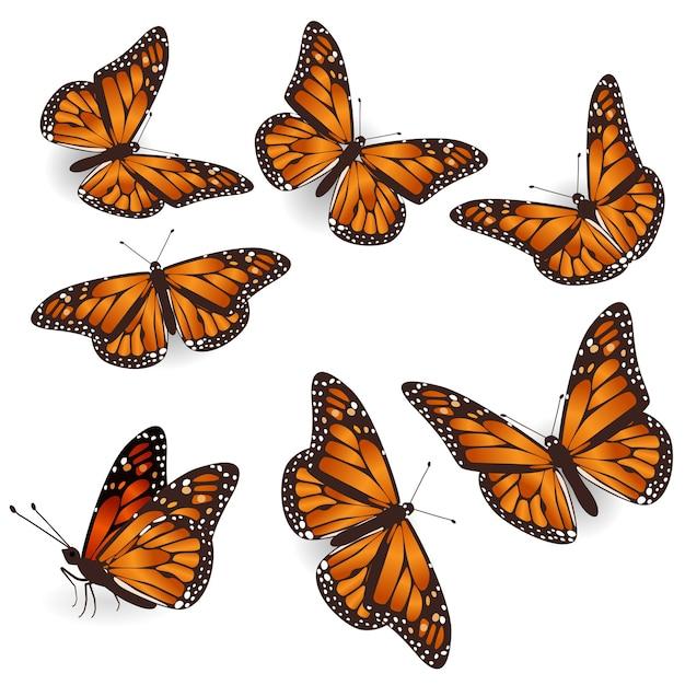 Insieme dell'illustrazione isolato farfalle volanti tropicali arancioni Vettore Premium