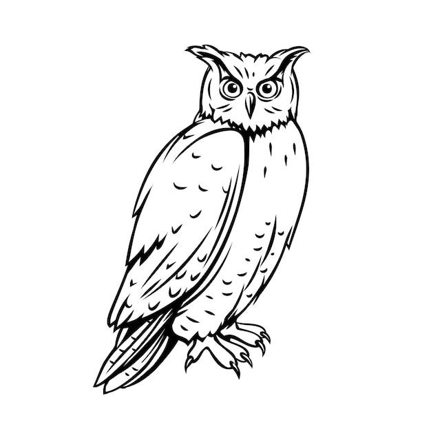 Uccello del gufo. icona di contorno per lo zoo illustrazione di inchiostro incisione Vettore Premium