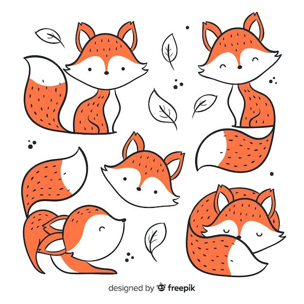 Confezione di volpi disegnate a mano Vettore Premium
