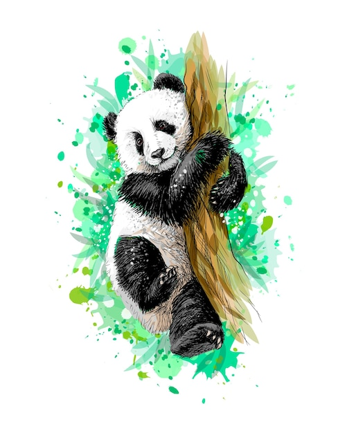 Cucciolo di panda bambino seduto su un albero da una spruzzata di acquerello, schizzo disegnato a mano. illustrazione di vernici Vettore Premium