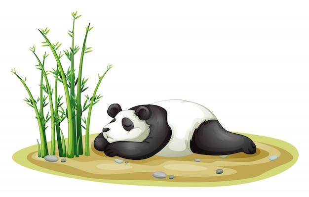 Un panda Vettore Premium