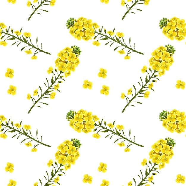 Modello fiori di colza, colza. brassica napus. Vettore Premium