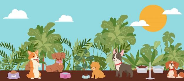 Animali domestici cani per la famiglia con i bambini, boston terrier, cane da lepre e husky migliori cani domestici razze cartoon illustrazione. Vettore Premium