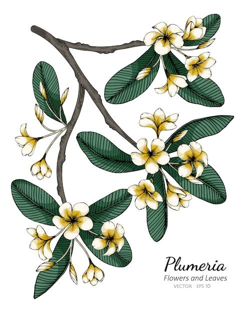 Illustrazione del disegno del fiore e della foglia di plumeria Vettore Premium