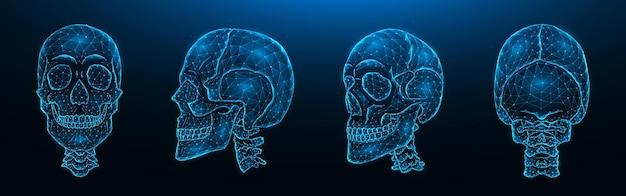 Illustrazione vettoriale poligonale di teschi umani, vista frontale, laterale e posteriore. set di modelli low poly di teschi con colonna cervicale isolata Vettore Premium