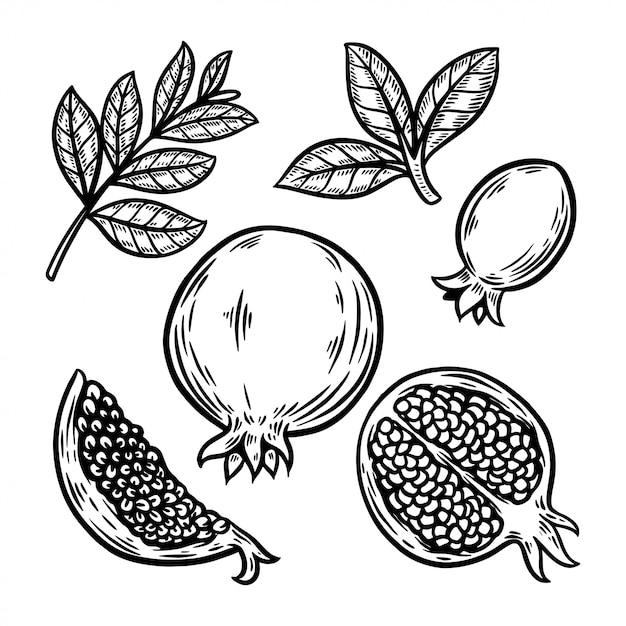 Illustrazione disegnata a mano dell'allegagione del melograno Vettore Premium