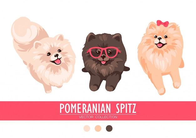 Crema di spitz pomeranian, arancione e scuro isolato su sfondo bianco. simpatici cuccioli di poms. piccolo spitz tedesco. cagnolini Vettore Premium
