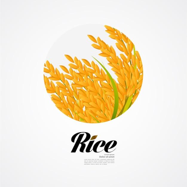 Premium rice concetto di design di grande qualità Vettore Premium
