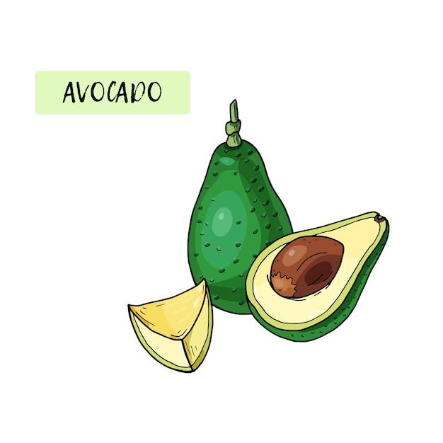 Avocado realistico cibo tropicale estivo per uno stile di vita sano cartone animato frutta intera e metà illustrazione disegnata a mano verdura biologica naturale. schizzo su sfondo bianco. Vettore Premium