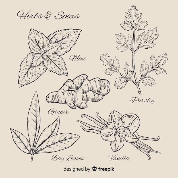 Realistico disegnato a mano spezie ed erbe botaniche Vettore Premium