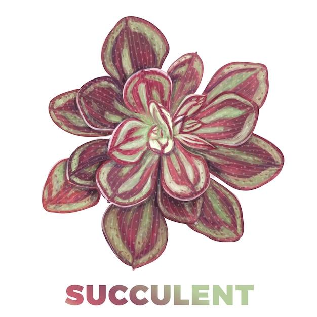 Illustrazione succulenta disegnata a mano realistica Vettore Premium