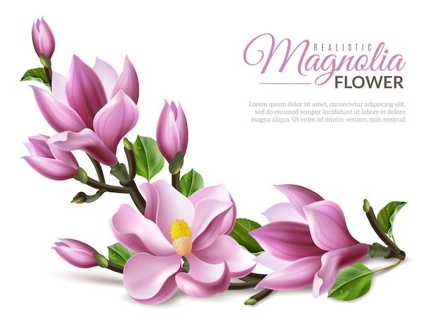 Illustrazione realistica della magnolia Vettore Premium