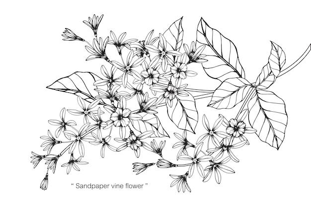 Illustrazione del disegno del fiore della vite della carta vetrata Vettore Premium
