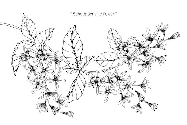 Illustrazione del disegno del fiore della vite della carta vetrata. Vettore Premium