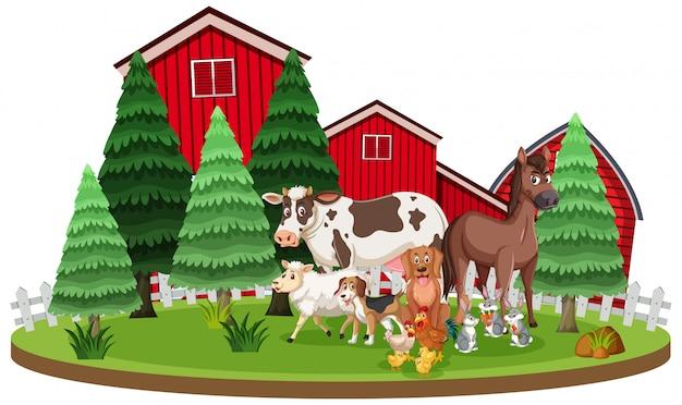 Scena con animali da fattoria in piedi davanti ai fienili Vettore Premium
