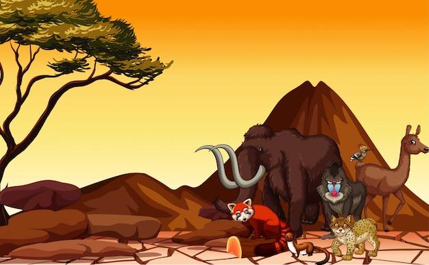 Scena con molti animali nel deserto Vettore Premium