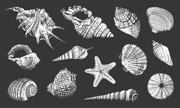 Set di conchiglie di mare. illustrazione disegnata a mano di shell. mollusco acquatico realistico dell'oceano della natura isolato su priorità bassa nera Vettore Premium