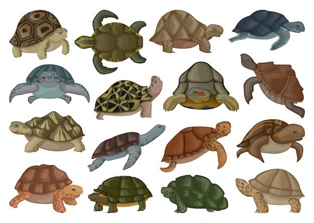 Illustrazione di vettore della tartaruga di mare su fondo bianco. Vettore Premium