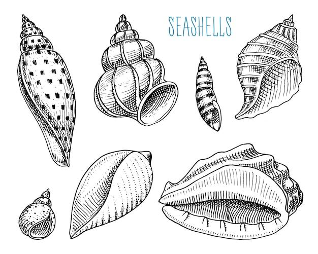 Conchiglie o mollusche diverse forme. creatura marina. Vettore Premium