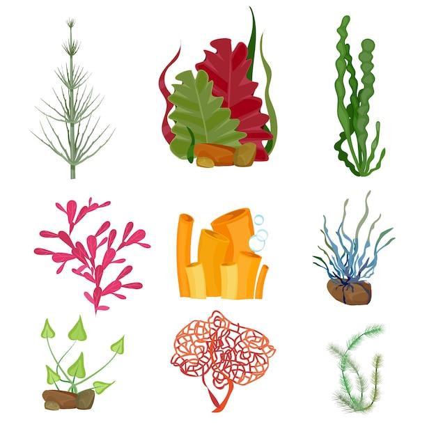 Alga marina. insieme subacqueo del fumetto della fauna selvatica botanica marina delle piante marine o dell'oceano. Vettore Premium