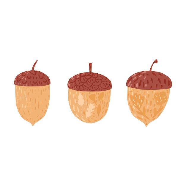 Impostare le ghiande su sfondo bianco. colore marrone ghiande stagione autunnale con fiori e foglie disegnati a mano in stile doodle Vettore Premium