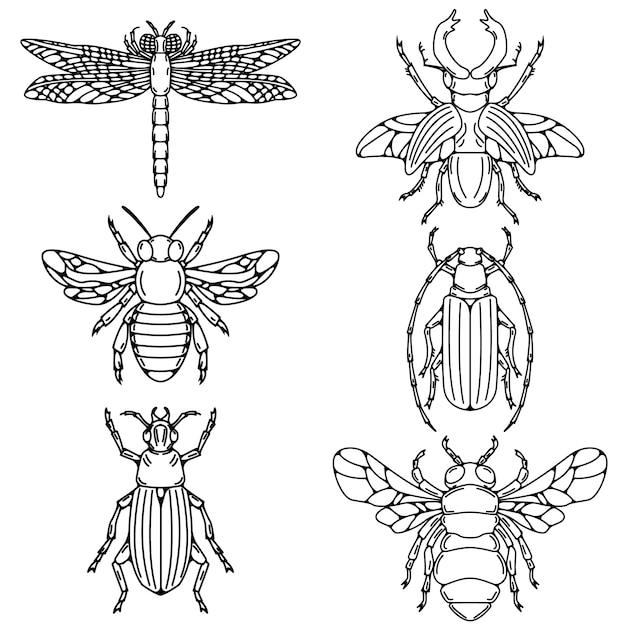 Insieme delle illustrazioni dello scarabeo su fondo bianco. Vettore Premium